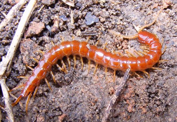 Centipede Price List